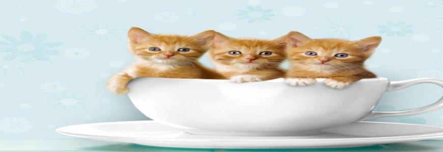 Bayrampaşa veteriner kliniği,acil ve nöbetci veteriner ait tanıtım resmi