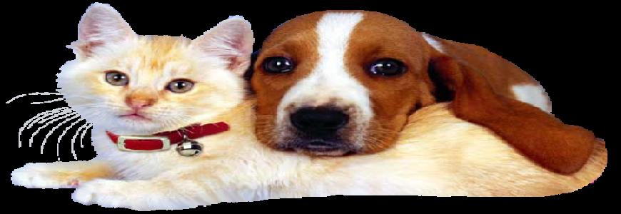 Kedi köpek tüyü kist yaparmı? ait tanıtım resmi