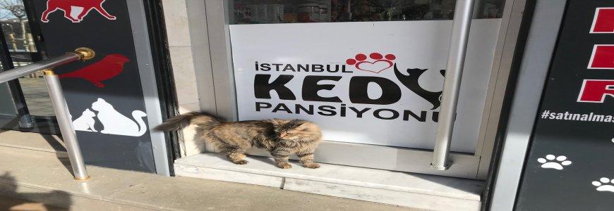 Kedilerde Aşı Takvimi Nasıldır ait tanıtım resmi