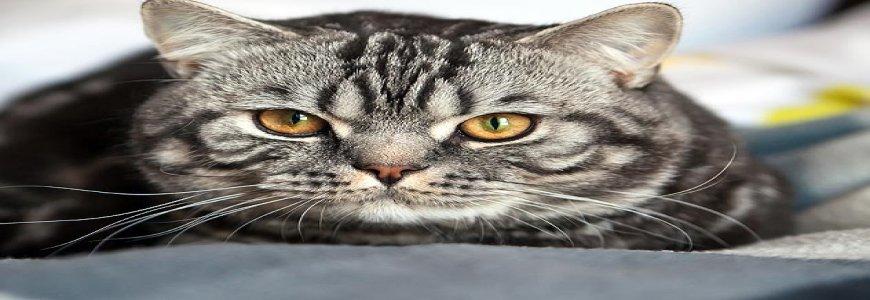 Dişi kedi kısırlaştırma fiyatları 2019,İstanbul kedi kısırlaştırma fiyat,kedi kısırlaştırma fiyat, ait tanıtım resmi