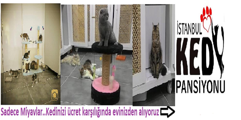 Kedi pansiyon