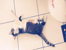 Kediler neden mırlar? Videosu Kapak Resmi