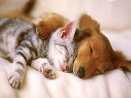 Kedi ve köpekler de kusma nedenleri nelerdir? Videosu Kapak Resmi
