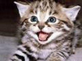 Yavru kedinin bakım beslenme ve aşıları hakkında bilgi Videosu Kapak Resmi