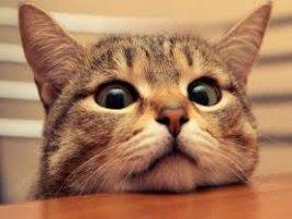 Evde hangi kedi beslenir,bakımı kolay kediler,sokaktan kedi alınıp beslenirmi.. Videosu Kapak Resmi