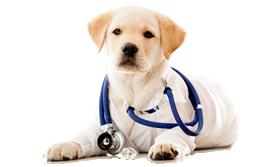 Esenler Veteriner Kliniği   Acil Veteriner Hizmeti